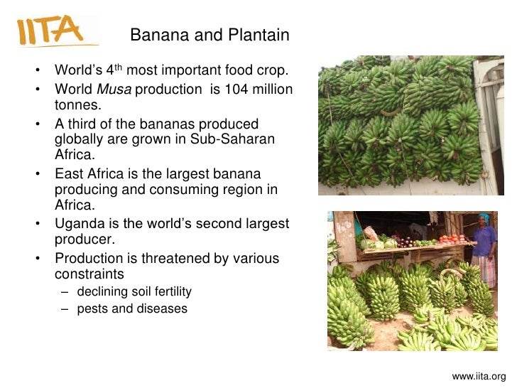 An Introduction to the Food Production in Tropical Africa
