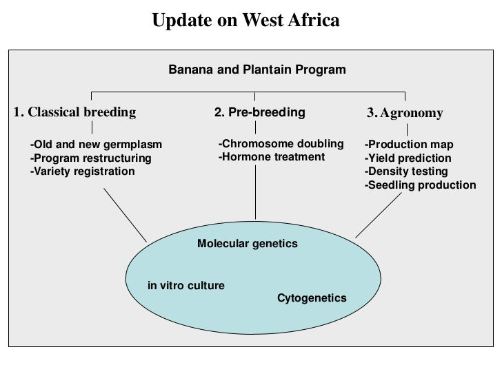 Update on West Africa                            Banana and Plantain Program1. Classical breeding                2. Pre-br...
