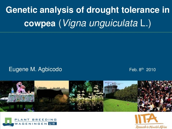 Genetic analysis of drought tolerance in     cowpea (Vigna unguiculata L.)Eugene M. Agbicodo            Feb. 8th 2010