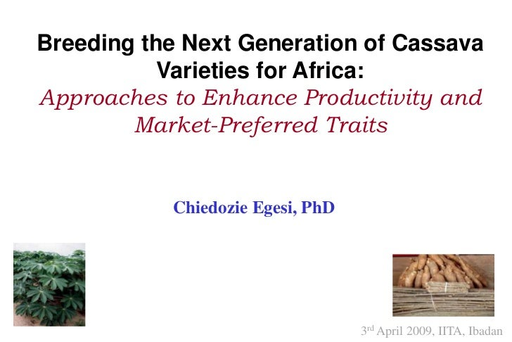 Breeding the Next Generation of Cassava           Varieties for Africa:Approaches to Enhance Productivity and        Marke...