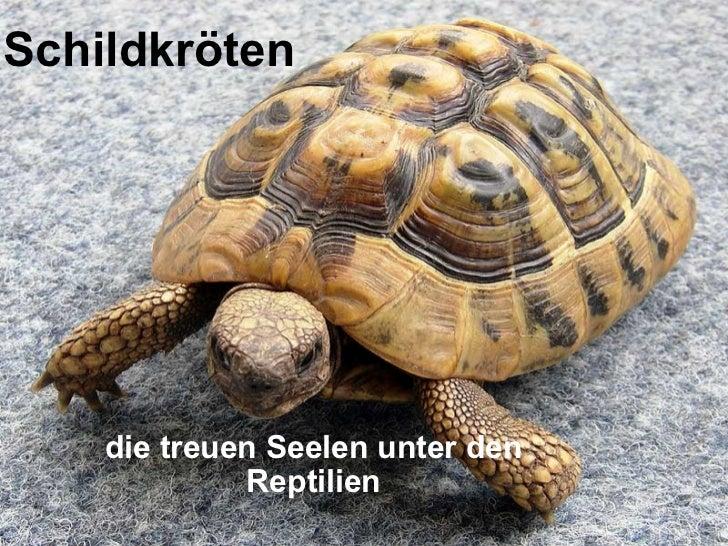 Schildkröten die treuen Seelen unter den Reptilien