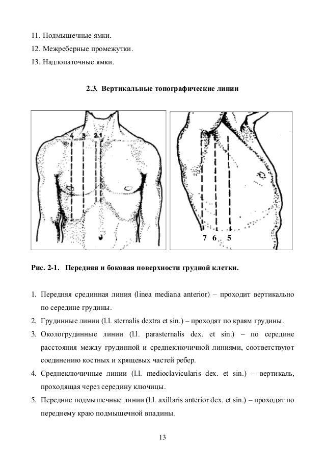 Схема топографические линии грудной клетки Грудная клетка - Анатомические варианты и ошибки