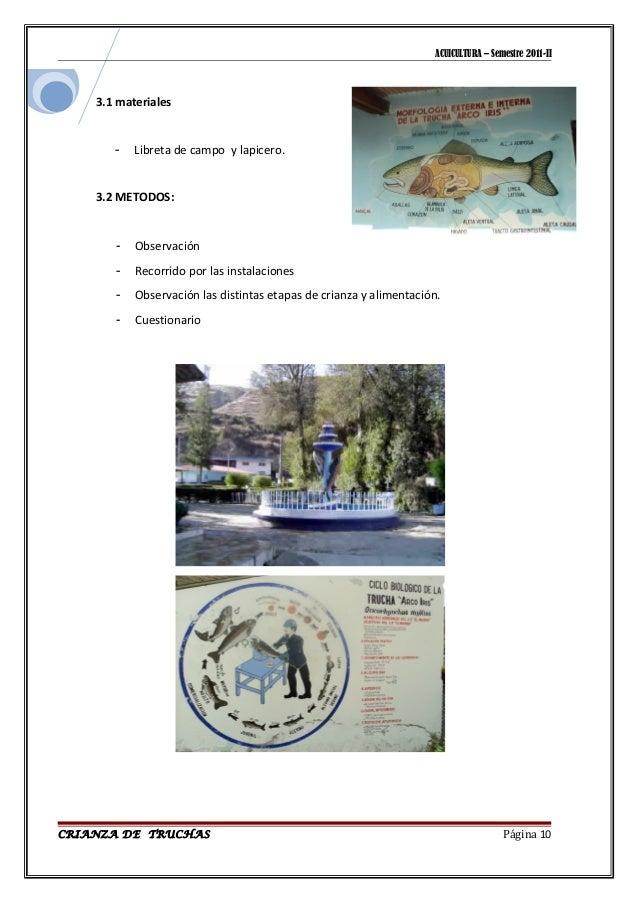 75615142 crianza de truchas ingenio for Crianza de truchas en lagunas