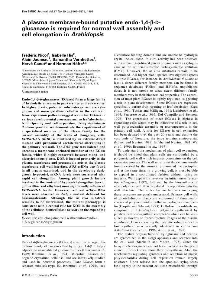 The EMBO Journal Vol.17 No.19 pp.5563–5576, 1998    A plasma membrane-bound putative endo-1,4-β-D- glucanase is required f...