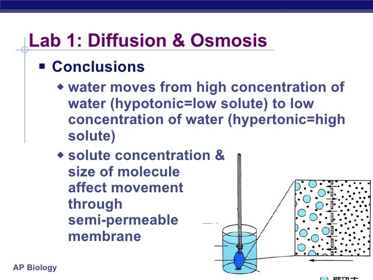 ap bio osmosis essay Ap biology diffusion and osmosis lab report - free download as word doc (doc / docx), pdf file (pdf), text file (txt) or read online for free.