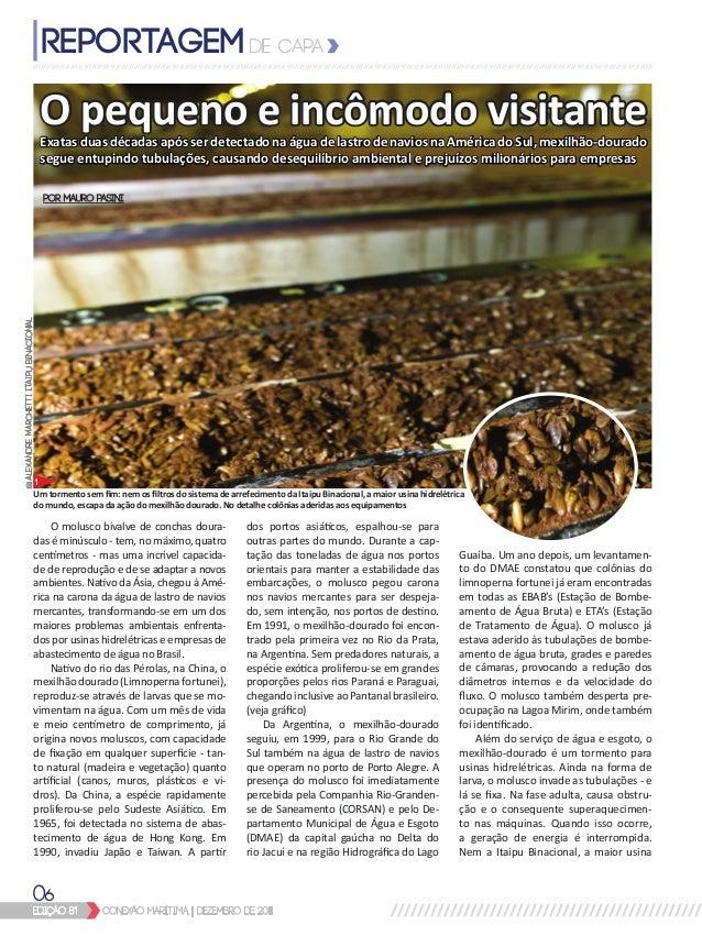 edição 81 conexão marítima   dezembro de 2011 06 O pequeno e incômodo visitante O molusco bivalve de conchas doura- das é ...