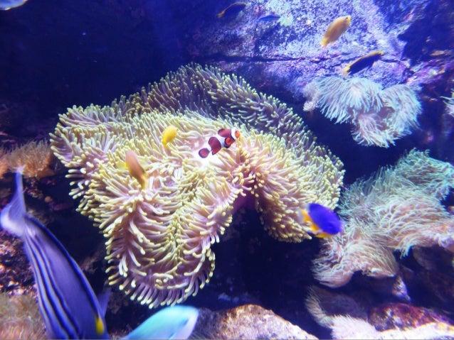 795- Sydney aquarium
