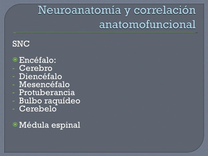 <ul><li>SNC </li></ul><ul><li>Encéfalo: </li></ul><ul><li>Cerebro </li></ul><ul><li>Diencéfalo </li></ul><ul><li>Mesencéfa...