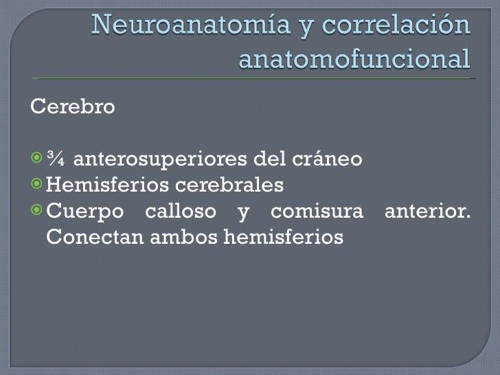 <ul><li>Cerebro </li></ul><ul><li>¾ anterosuperiores del cráneo </li></ul><ul><li>Hemisferios cerebrales </li></ul><ul><li...