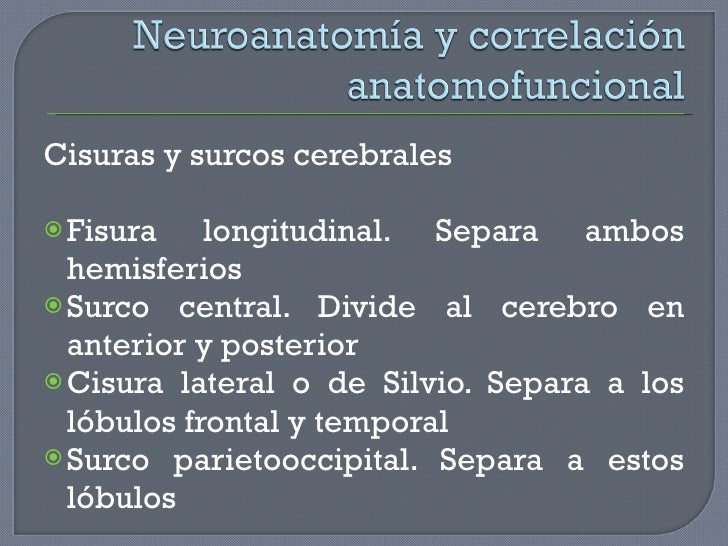 <ul><li>Cisuras y surcos cerebrales </li></ul><ul><li>Fisura longitudinal. Separa ambos hemisferios </li></ul><ul><li>Surc...