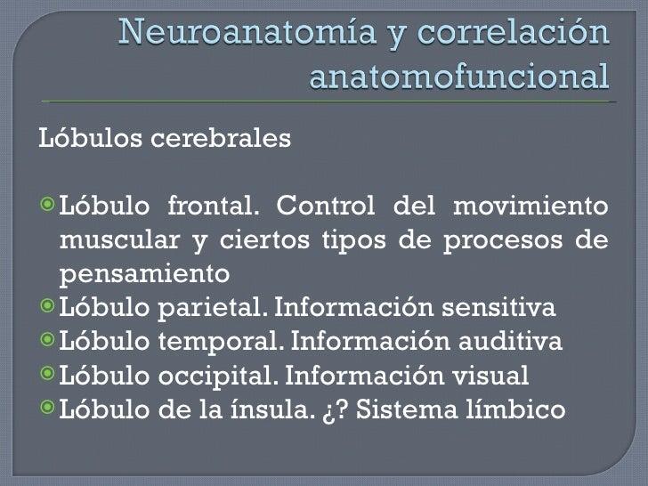 <ul><li>Lóbulos cerebrales </li></ul><ul><li>Lóbulo frontal. Control del movimiento muscular y ciertos tipos de procesos d...