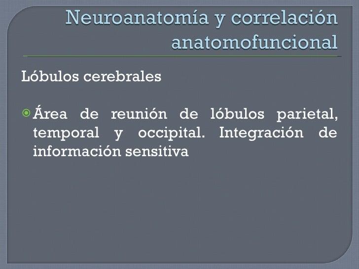 <ul><li>Lóbulos cerebrales </li></ul><ul><li>Área de reunión de lóbulos parietal, temporal y occipital. Integración de inf...