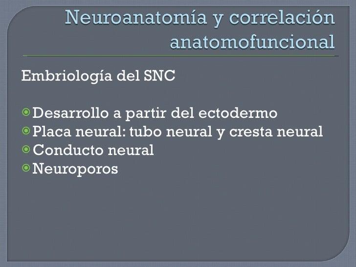 <ul><li>Embriología del SNC </li></ul><ul><li>Desarrollo a partir del ectodermo </li></ul><ul><li>Placa neural: tubo neura...