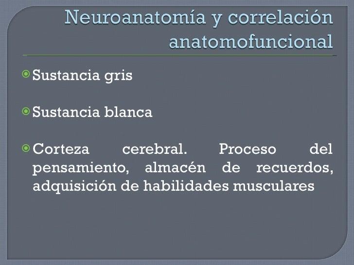 <ul><li>Sustancia gris </li></ul><ul><li>Sustancia blanca </li></ul><ul><li>Corteza cerebral. Proceso del pensamiento, alm...
