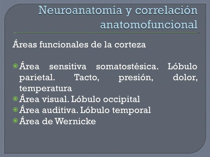 <ul><li>Áreas funcionales de la corteza </li></ul><ul><li>Área sensitiva somatostésica. Lóbulo parietal. Tacto, presión, d...