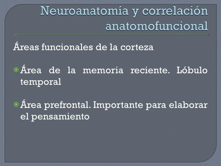 <ul><li>Áreas funcionales de la corteza </li></ul><ul><li>Área de la memoria reciente. Lóbulo temporal </li></ul><ul><li>Á...