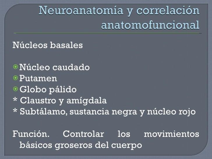 <ul><li>Núcleos basales </li></ul><ul><li>Núcleo caudado </li></ul><ul><li>Putamen </li></ul><ul><li>Globo pálido </li></u...