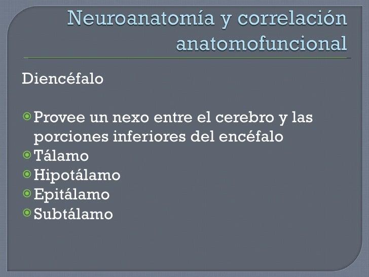 <ul><li>Diencéfalo </li></ul><ul><li>Provee un nexo entre el cerebro y las porciones inferiores del encéfalo </li></ul><ul...
