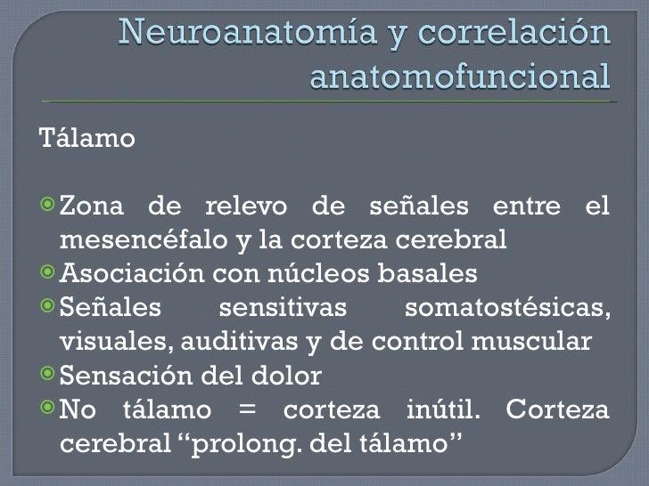 <ul><li>Tálamo </li></ul><ul><li>Zona de relevo de señales entre el mesencéfalo y la corteza cerebral </li></ul><ul><li>As...