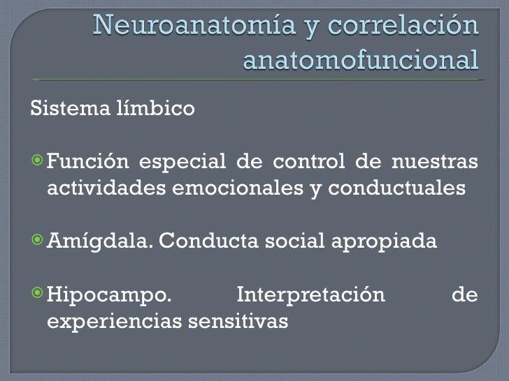 <ul><li>Sistema límbico </li></ul><ul><li>Función especial de control de nuestras actividades emocionales y conductuales <...