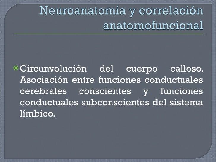<ul><li>Circunvolución del cuerpo calloso. Asociación entre funciones conductuales cerebrales conscientes y funciones cond...