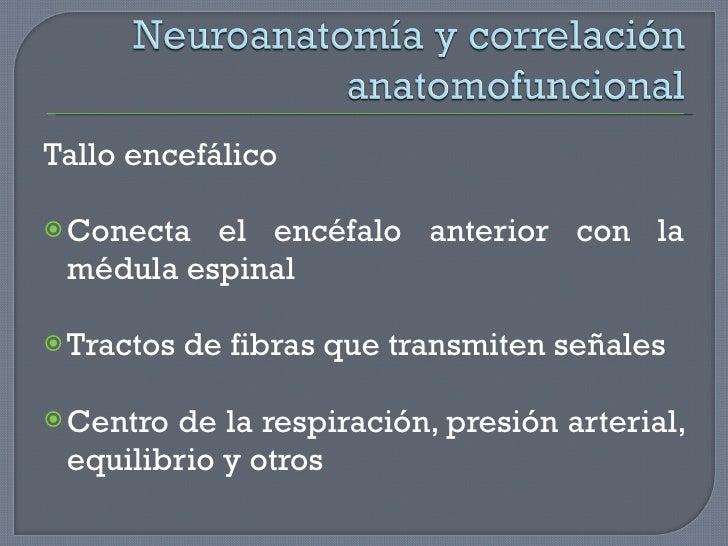 <ul><li>Tallo encefálico </li></ul><ul><li>Conecta el encéfalo anterior con la médula espinal </li></ul><ul><li>Tractos de...
