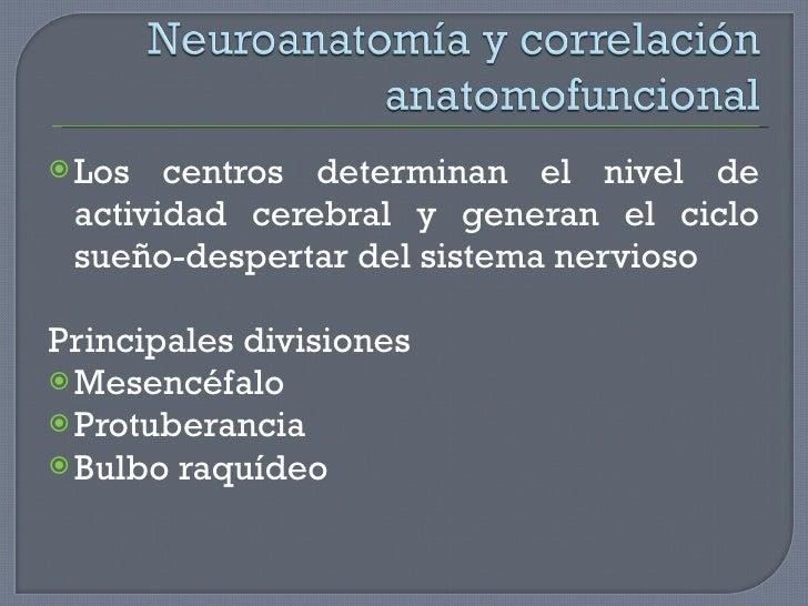 <ul><li>Los centros determinan el nivel de actividad cerebral y generan el ciclo sueño-despertar del sistema nervioso </li...