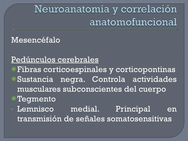 <ul><li>Mesencéfalo </li></ul><ul><li>Pedúnculos cerebrales </li></ul><ul><li>Fibras corticoespinales y corticopontinas </...