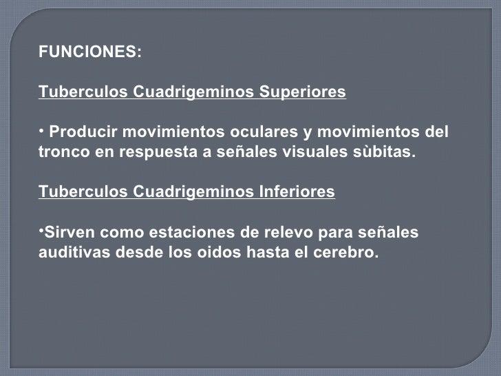 <ul><li>FUNCIONES: </li></ul><ul><li>Tuberculos Cuadrigeminos Superiores </li></ul><ul><li>Producir movimientos oculares y...