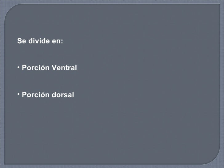 <ul><li>Se divide en:  </li></ul><ul><li>Porción Ventral </li></ul><ul><li>Porción dorsal </li></ul>