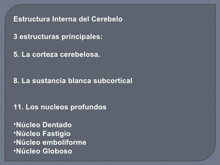 <ul><li>Estructura Interna del Cerebelo  </li></ul><ul><li>3 estructuras principales: </li></ul><ul><li>La corteza cerebel...