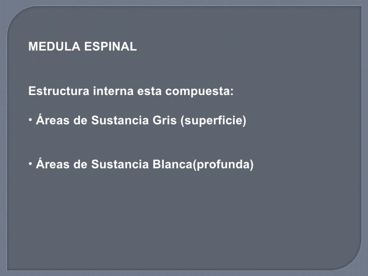 <ul><li>MEDULA ESPINAL  </li></ul><ul><li>Estructura interna esta compuesta: </li></ul><ul><li>Áreas de Sustancia Gris (su...