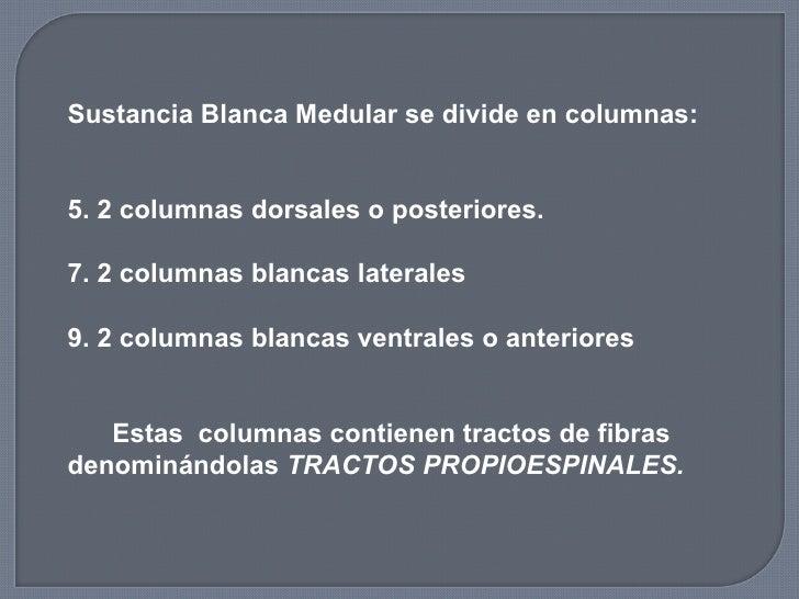 <ul><li>Sustancia Blanca Medular se divide en columnas: </li></ul><ul><li>2 columnas dorsales o posteriores. </li></ul><ul...