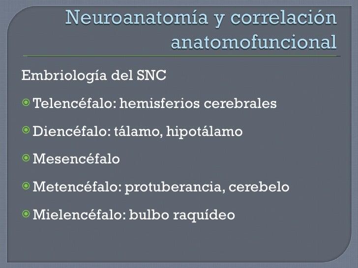 <ul><li>Embriología del SNC </li></ul><ul><li>Telencéfalo: hemisferios cerebrales </li></ul><ul><li>Diencéfalo: tálamo, hi...