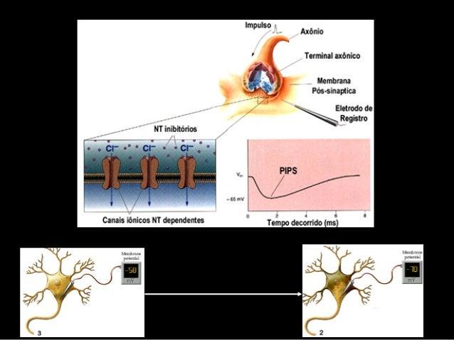 Propriedades dos ReceptoresEspecificidade aos estímulos sensoriais                                      Os     receptores ...
