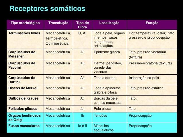Receptores Especiais- Epitélios sensoriaisReceptores especiais: células sensoriais secundáriasCélula sensorial secundária ...