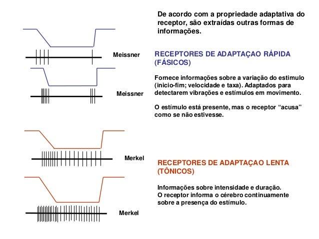 Receptores de adaptação lenta e rápida                                          Pressão mecânica                          ...