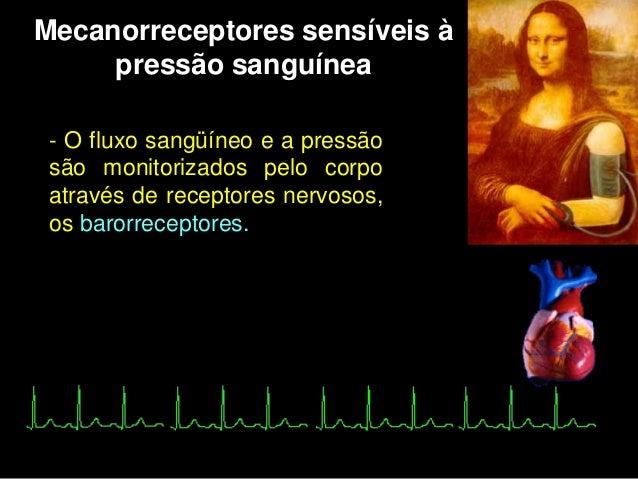  Localização dos barorreceptores                             Nervo Glossofaríngeo                             Nervo Vago ...