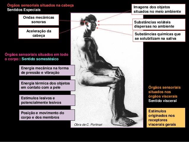 Órgãos sensoriais situados na cabeça                          Imagens dos objetos Sentidos Especiais                      ...