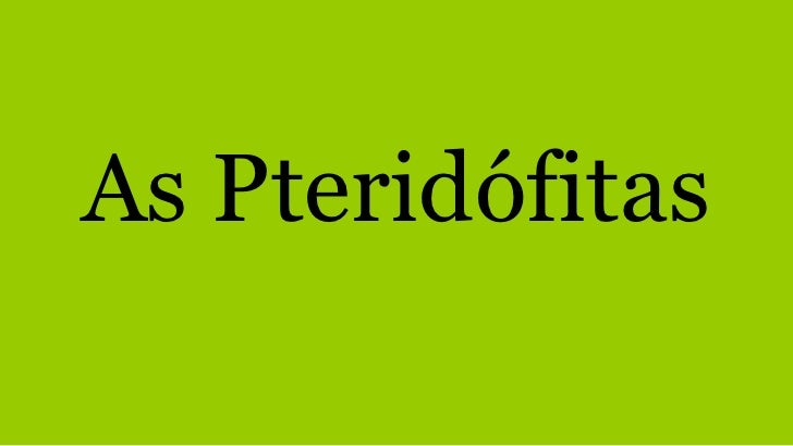 As Pteridófitas