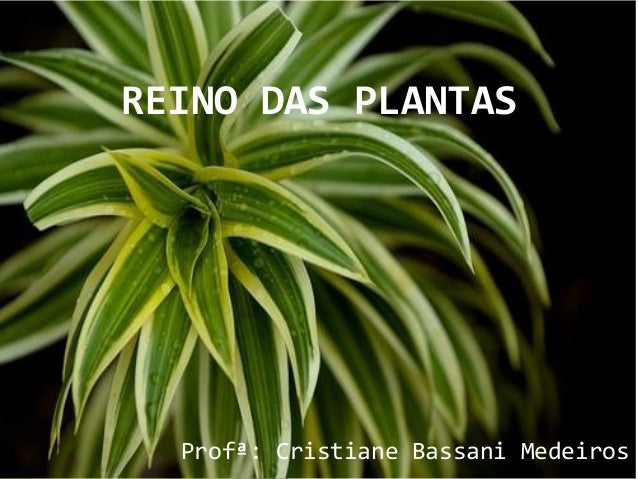 REINO DAS PLANTAS Profª: Cristiane Bassani Medeiros