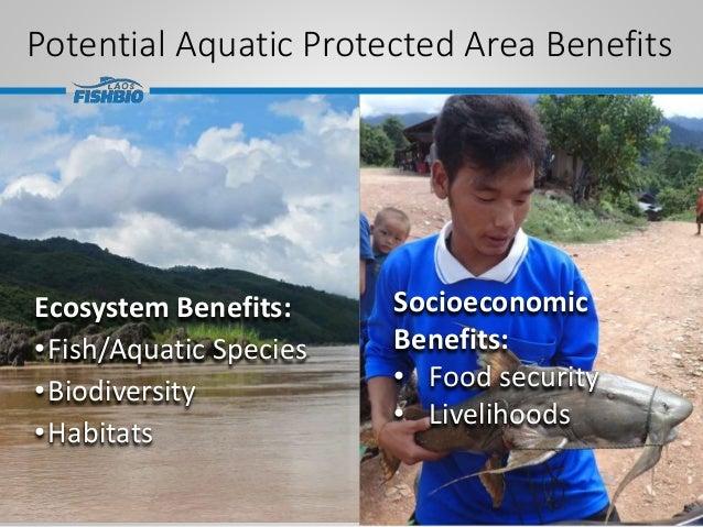 Potential Aquatic Protected Area Benefits Ecosystem Benefits: •Fish/Aquatic Species •Biodiversity •Habitats Socioeconomic ...