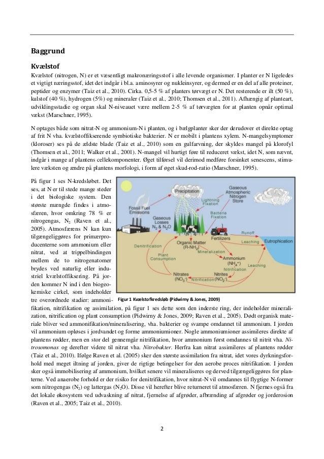 5 Assimileringen foregår i forbindelse med citronsyrecyklussen, da der er behov for mange kulstofskeletter til syntesen af...