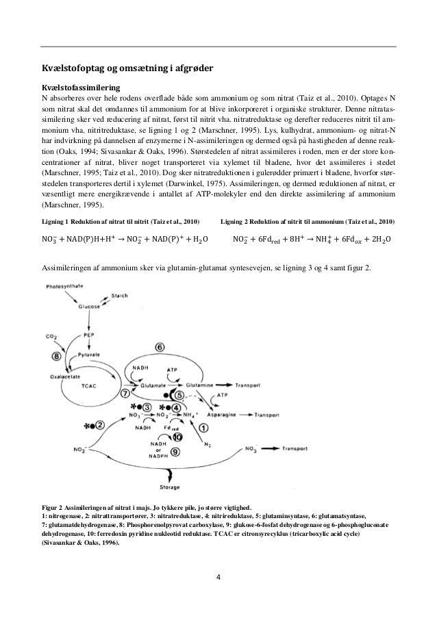 7 Kvælstofs funktion N som nitrat, ammonium og frit N danner bl.a. aminosyrer, amider, peptider, aminer og ureider, som er...