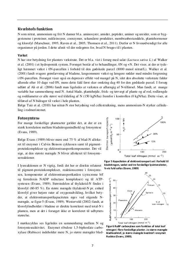 10 Udbyttepotentiale I litteraturen er der stor uenighed om, hvorvidt stigende N-gødskning er lig med stigende udbytter. D...