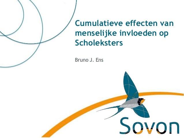 Cumulatieve effecten van  menselijke invloeden op  Scholeksters  Bruno J. Ens