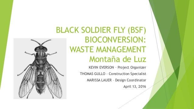 BLACK SOLDIER FLY (BSF) BIOCONVERSION: WASTE MANAGEMENT Montaña de Luz KEVIN EVERSON – Project Organizer THOMAS GULLO – Co...