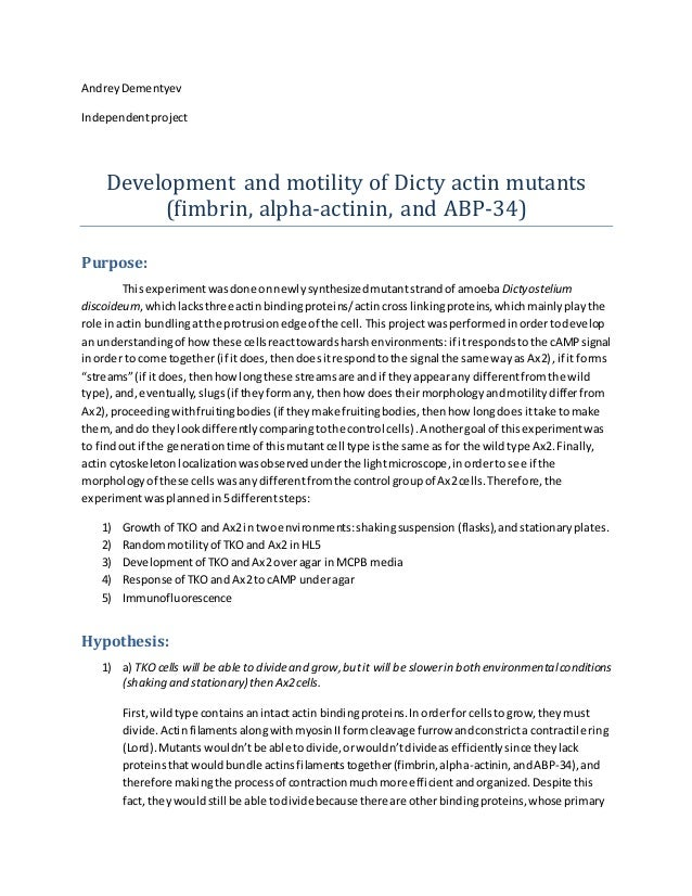 AndreyDementyev Independentproject Development and motility of Dicty actin mutants (fimbrin, alpha-actinin, and ABP-34) Pu...