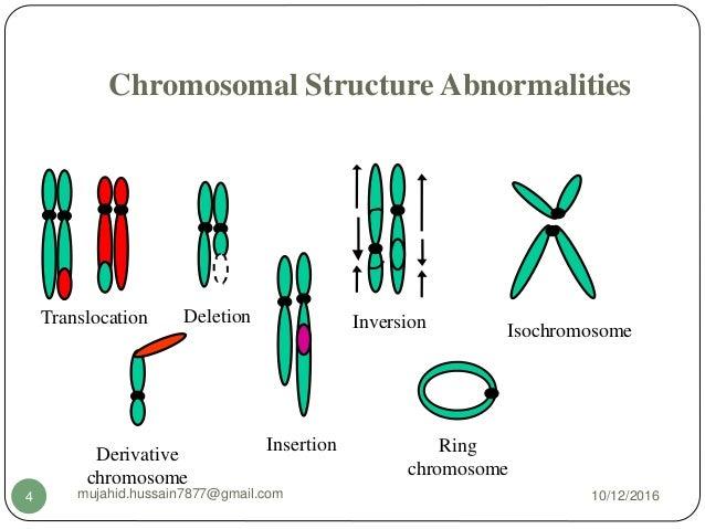 Image result for chromosomal aberrations