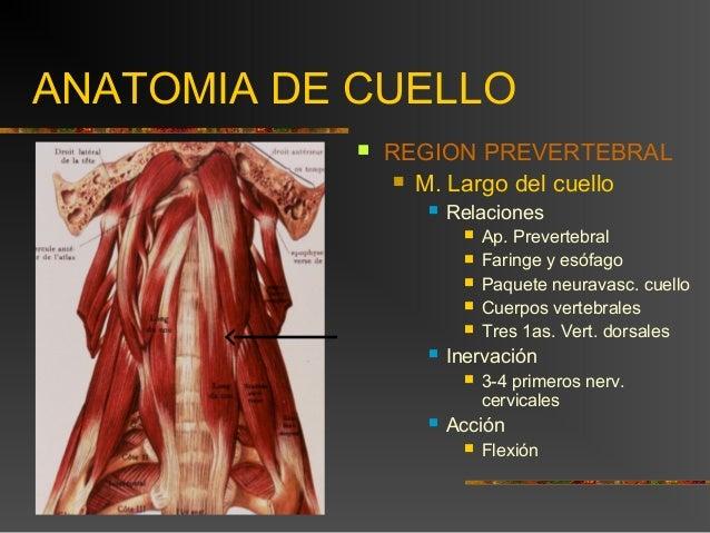 7 cuello musculos y aponeurosis